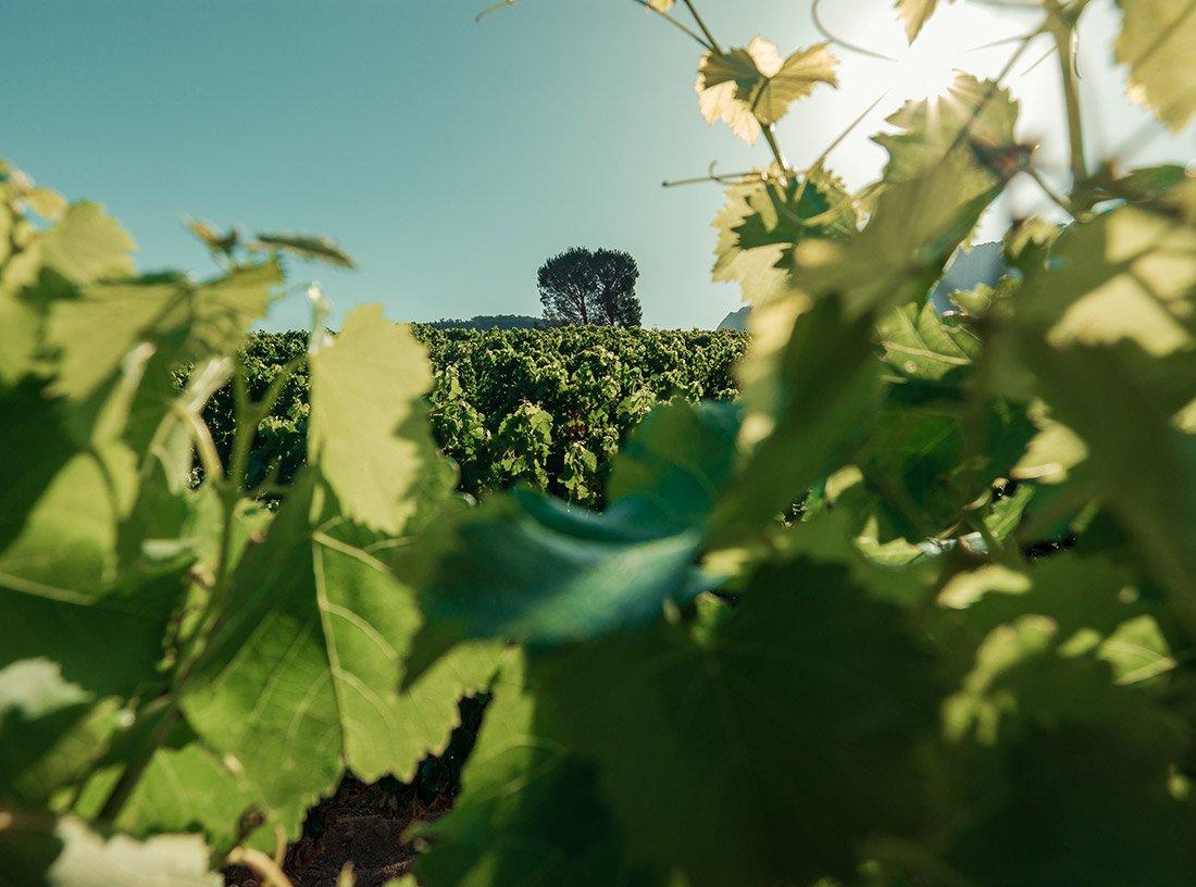 Vitigni Cannonau Sardegna